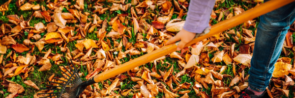 The Do's and Don'ts of Cleaning Up Leaves